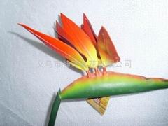 蜻蜓花,康乃馨,天堂鳥,惠蘭花,木蘭花,聖誕花,盆景,非洲菊