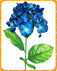 繡球天堂鳥,惠蘭花,木蘭花,聖誕花,盆景,非洲菊,馬蹄蓮