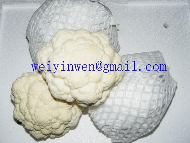 白菜花、白花菜 1