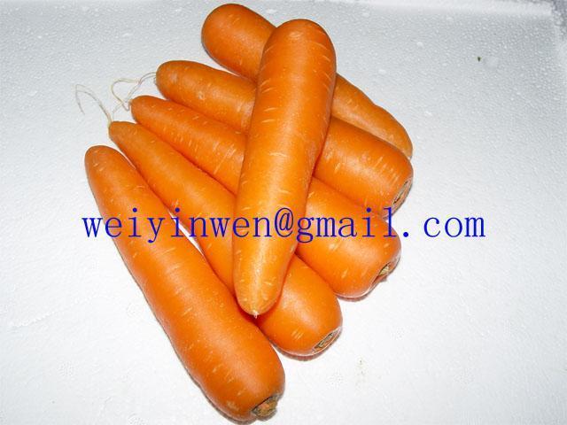 胡萝卜 1