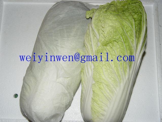 大白菜 1