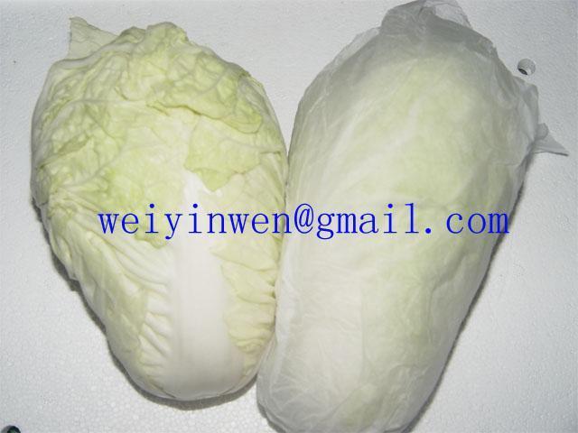 大白菜02 1