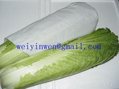 Long Cabbage