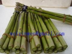 Asparagus 02