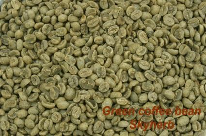Green coffee bean Extract /Chlorogenic acid 1