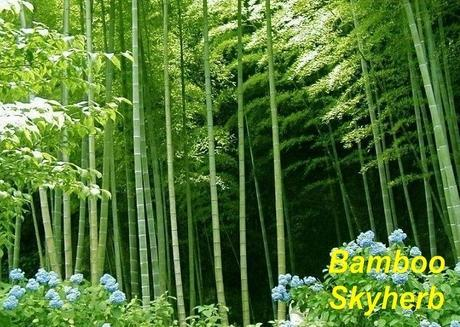 Bamboo leaf Extract 1