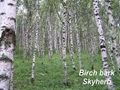 Birch bark Extract (Betulin & Betulinic