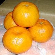 mandarin orange(Lokam)