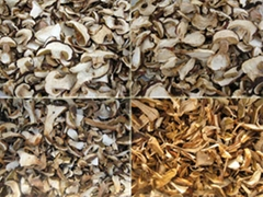 Dried mushroom Boletus edulis