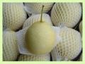 ya pear 1
