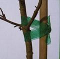 Tree tie 1
