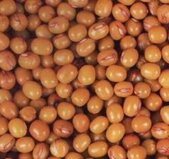 黑龙江黄大豆
