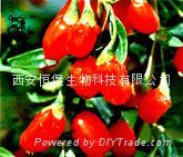 HBXIAN Lycium barbarum polysaccharide extract powder---Regulation of immune