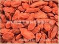 HBXIAN Lycium barbarum polysaccharide extract powder---Regulation of immune 2