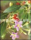 HBXIAN Lycium barbarum polysaccharide extract powder---Regulation of immune 4