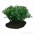 Aqua-Terra Plants,poly resin terrariums plants