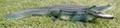 polyresin alligator, resin alligator