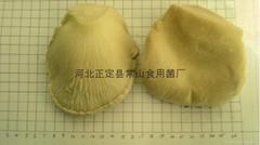 白灵菇罐头