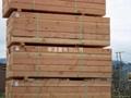 加拿大木材出  易中心 3