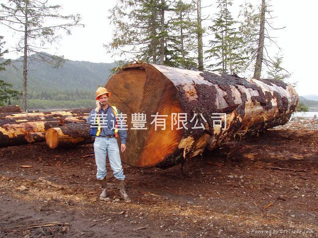 Hardwood Vs Softwood Products Products ~ Softwood hardwood log wtf canada trading company