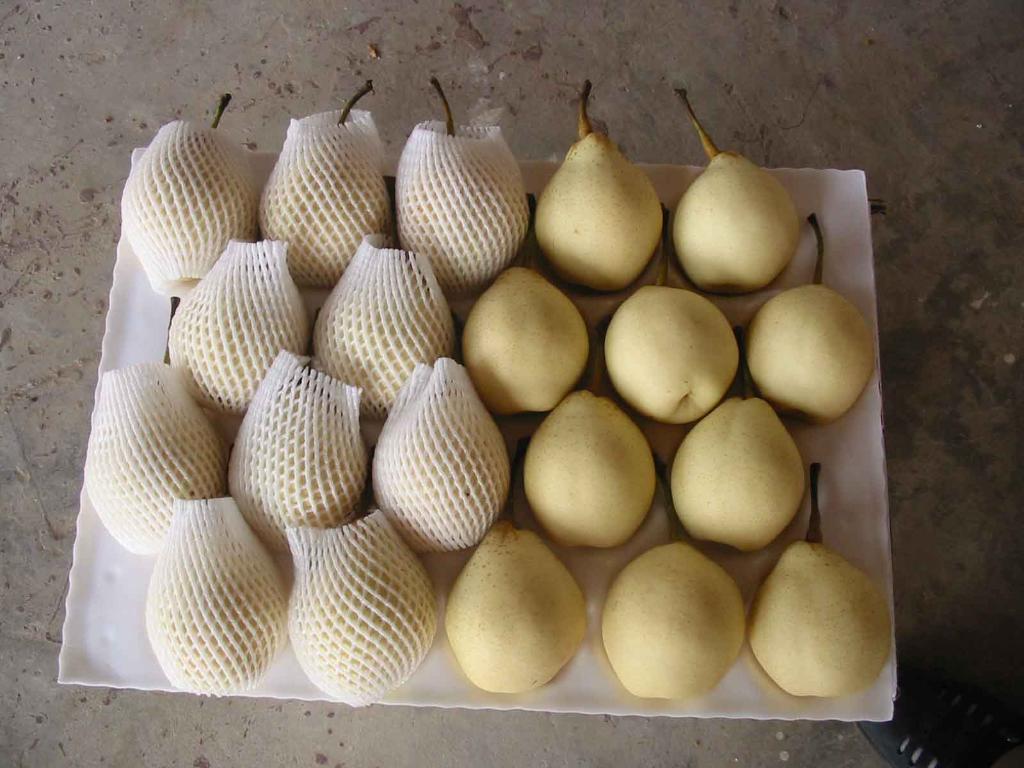 Fresh Ya Pears 1