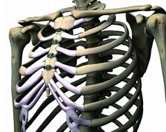 左肋骨疼是怎么回事