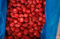 供应速冻草莓(哈尼、宝交、全明星、女峰、美六、美十三等)