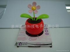 solar awag flower