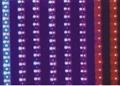 LED rope light 5