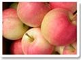 gala apple 1