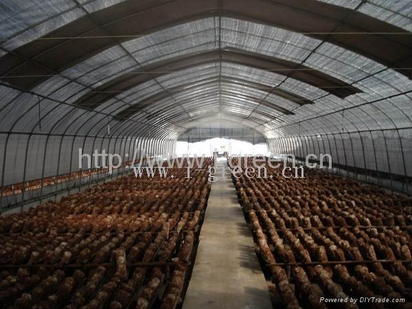 Mushroom Greenhouse - WL8132 - IGreen (China Manufacturer ...