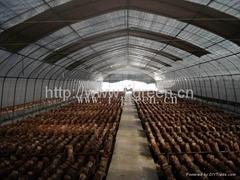 Mushroom Greenhouse