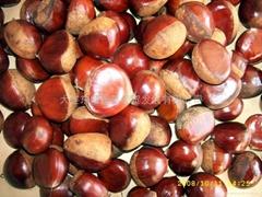 fresh chestnut