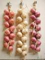 artificial garlic and oinion