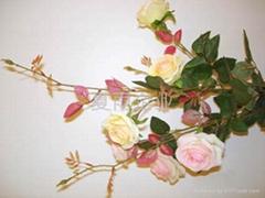 带刺(爱情)玫瑰
