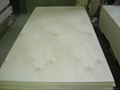 樺木膠合板