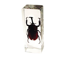 insect paperweight 1