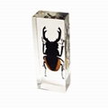 insect paperweight 2
