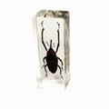insect paperweight 4