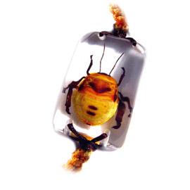 insect bracelet  2