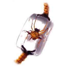 insect bracelet  3
