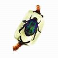 insect bracelet  5
