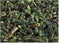 [高綠茶業]供應上海鐵觀音A001 1