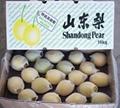 Shandong pear 2