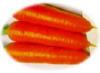 胡蘿蔔 1
