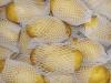 荷兰土豆 1