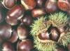 Fresh Chestnuts 1