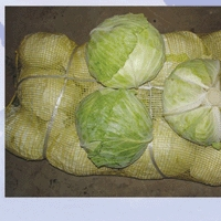 stone cabbage