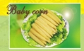 Canned Baby Corn 2