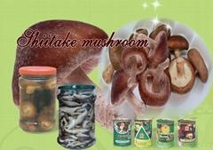 Canned  Shiitake Mushroo